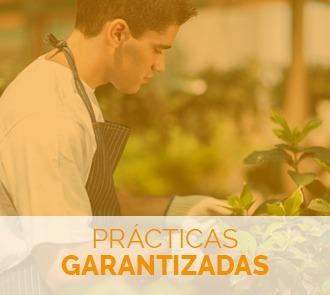 Estudia el Máster en Producción de Semillas y Plantas en Vivero y aprende de este oficio con prácticas garantizadas