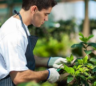 Estudia el Máster en Producción de Semillas y Plantas en Vivero y aprende de este oficio