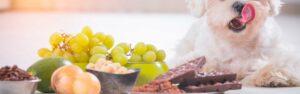 Descubre los alimentos prohibidos para perros y cómo actuar ante un caso de intoxicación