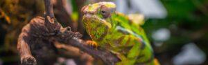Descubre los animales exóticos que puedes tener en casa
