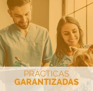 estudiar el auxiliar de veterinaria con prácticas garantizadas
