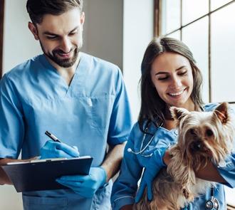 estudiar el curso de auxiliar de veterinaria te permitirá trabajar como asistente del veterinario