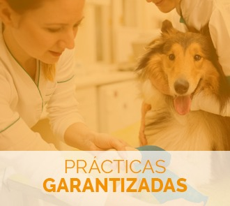 Aprende con el Curso de Atención Clínica en Centros Veterinarios con prácticas garantizadas