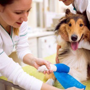 Aprende con el Curso de Atención Clínica en Centros Veterinarios