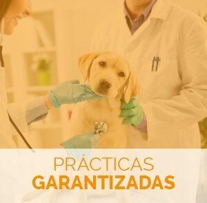 estudiar el curso de atv con prácticas garantizadas