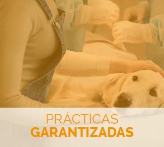 estudiar el curso de urgencias veterinarias con prácticas garantizadas