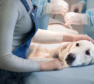 Estudiar el curso de urgencias veterinarias