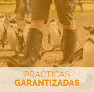 Fórmate con el Máster en Cuidado de Animales Salvajes en Zoológicos y Acuarios con prácticas garantizadas