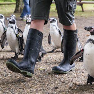 Fórmate con el Máster en Cuidado de Animales Salvajes en Zoológicos y Acuarios