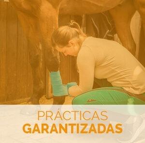 Fórmate con el Máster en Cuidados y Manejo de Caballos y especialízate con prácticas garantizadas