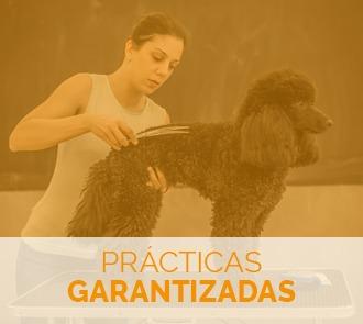 estudiar el máster en estética canina y felina con prácticas garantizadas