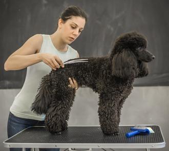 Cursa el Máster en Estética y Peluqueria Canina y Felina y aprende todas las técnicas