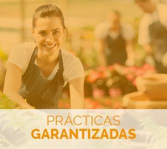 Fórmate con el Máster en Paisajismo y Diseño de Parques y Jardines y aprende todas las técnicas del sector con prácticas garantizadas