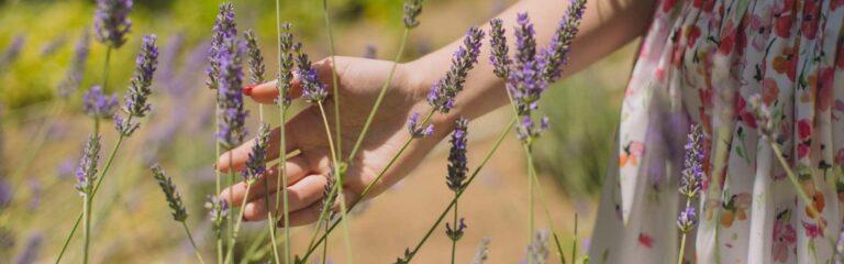 Conoce las plantas aromáticas que puedes tener en tu jardín